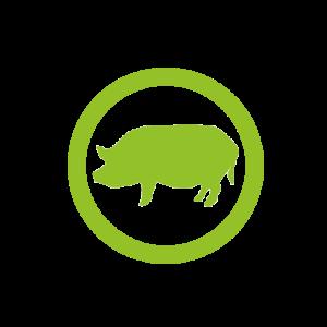 4biodx-breeding_pig_rond_light
